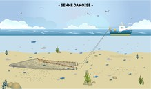La senne Danoise/Ecossaise